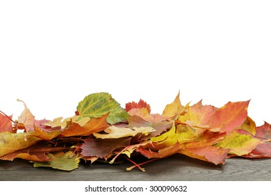 autumn leaves for border composition, isolated on white background