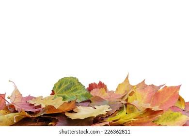 autumn leaves border, isolated on white background