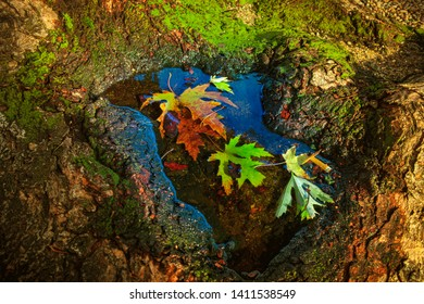 Autumn leaves and a cigarette filter in a pool formed by the roots of a tree