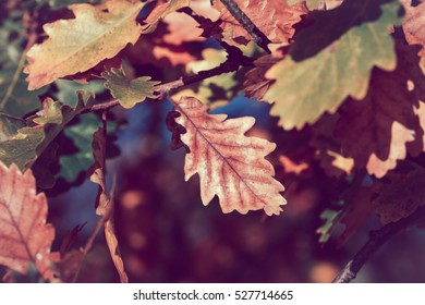 Autumn leaves closeup with vintage style
