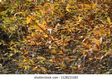 Autumn leaves in the colours of red, green, yellow, brown and gold cover a cluster of trees. They form an abstract pattern of bright colours.