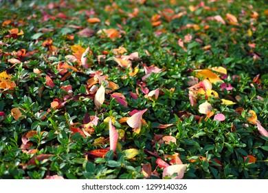 Autumn leaves concept image.