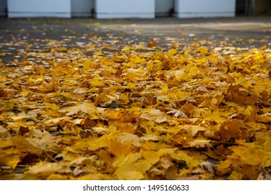 Autumn leaves cover the street