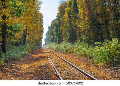 Autumn leaves cover train tracks in New England