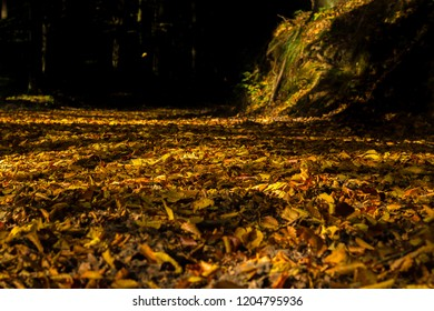 Autumn leaves covering forest floor on the road after falling down. Golden, yellow and orange colors with sunlight.
