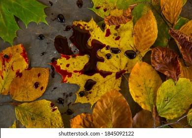 Hojas de otoño con gotas de sangre para el tema de halloween