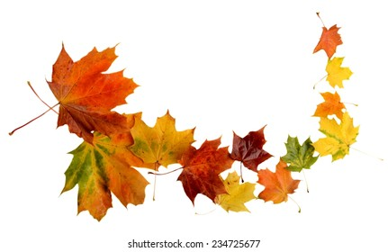 Autumn leaves during blizzard isolated on white background