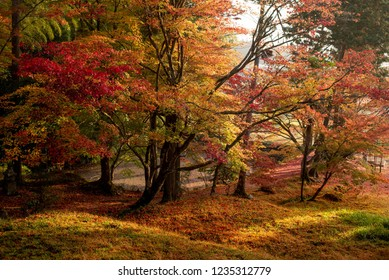 autumn leaves in the early morning