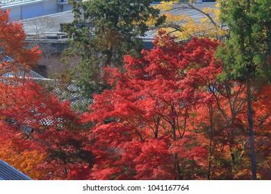 Autumn Leaves Of Eikan-do Zenrin-ji, kyoto