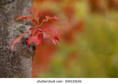 Autumn. Autumn leaves are a ever present sign that winter is on its way. The colour of the leaves pick up the sunshine and give some colour to the end of summer.