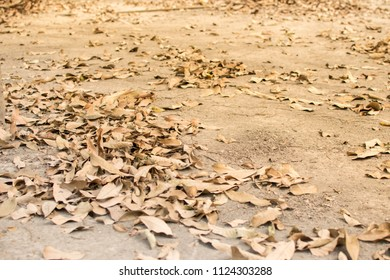 Autumn leaves fall on the ground.ground, background, leaf