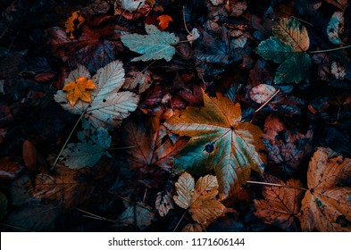 autumn leaves fallen on the forest ground