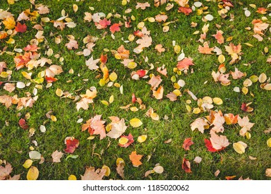 Autumn leaves fallen on grass nature background
