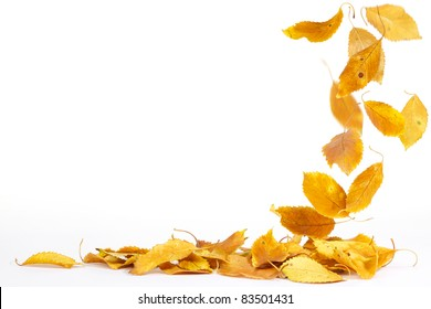 Autumn leaves falling to the ground
