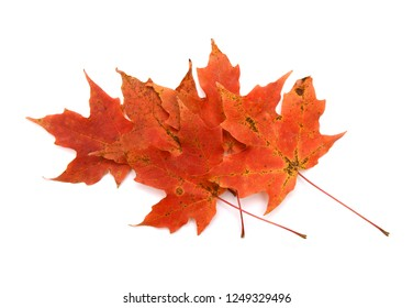 Autumn leaves falling isolated on white background
