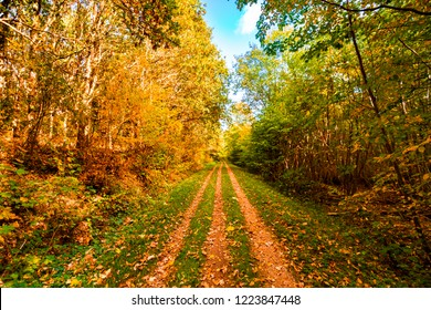 Autumn leaves falling on a forest trail in the fall in beautiful golden colors