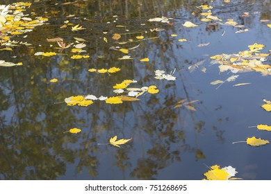 autumn leaves floating along the surface of the river near the shore