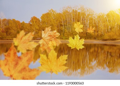 Autumn leaves flying over the lake