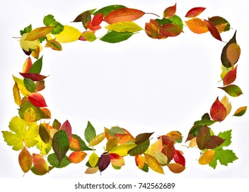 Autumn leaves, frame of colourful leaves with white background
