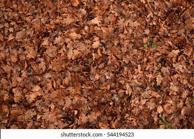 Autumn leaves full frame abstract background