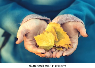 Autumn leaves in girl hands. Autumn mood. Fall time. Sunny autumn weather. Autumn girl enjoy fallen leaves. Fallen yellow leaves, closeup