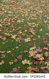 Autumn leaves in the grass at Canela, Rio Grande do Sul - Brazil.
