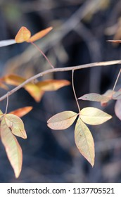 Autumn leaves hanging off the branch of a tree with a brown background.