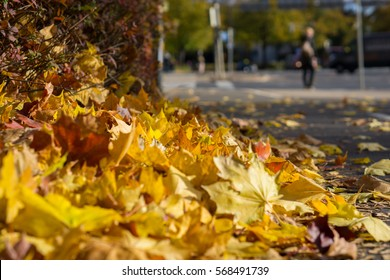 Autumn leaves heap on a street with a blurred background shilouette