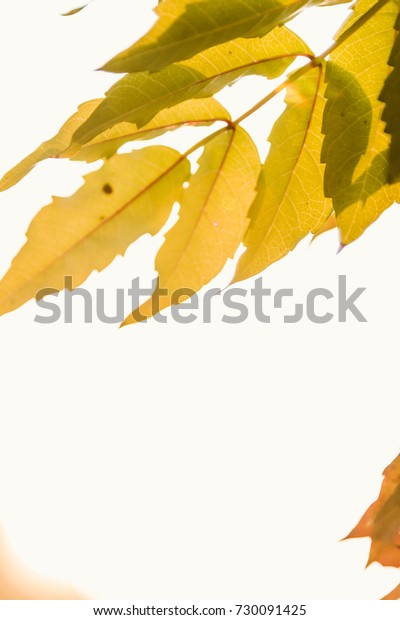Autumn leaves are highlighted by late afternoon sun.