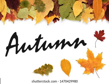 Autumn leaves and inscription Autumn on white background or space for your text