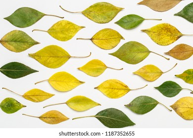 Autumn leaves isolated on white background. Autumn leaves background. Autumn composition. Frame made of autumn leaves on white