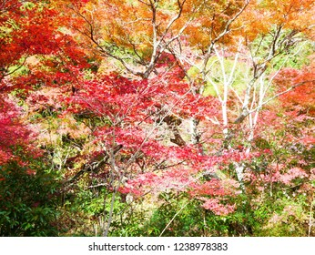 Autumn leaves of Iwayado. Iwayado is a natural shrine in Seto city(Japan).