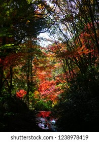 Autumn leaves of Iwayado. Iwayado is a natural shrine in Seto city(Japan).