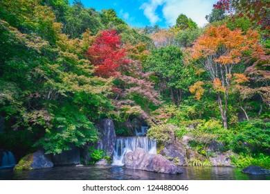 Autumn leaves in Japanese garden.