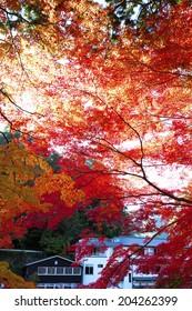The Autumn Leaves Of Koarashi Valley