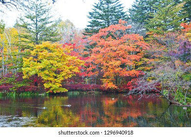 Autumn leaves of kumoba pond in Karuizawa,Japan