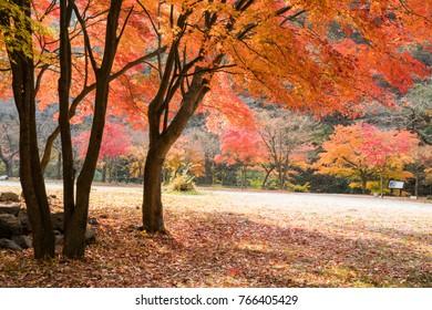 Autumn leaves landscape
