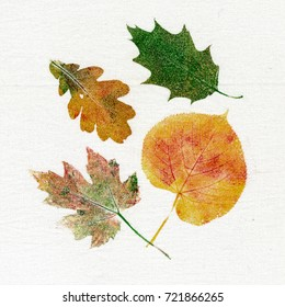 Autumn leaves of maple, oak and linden printed on canvas
