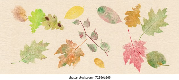 Autumn leaves of maple, oak, linden, beech and wild wine printed on canvas