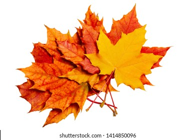 Autumn Leaves of maple on a white background.