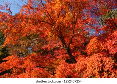 Autumn leaves in Mount Takao