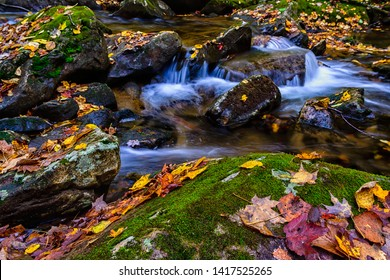 Autumn leaves, Mountain Stream, Barrenshe Run, Monongahela National Forest, West Virginia, USA