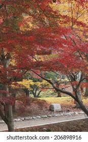 Autumn Leaves Of Nara Park