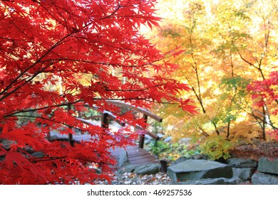autumn leaves as nice natural color background
