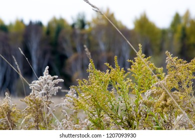 Autumn Leaves in Northern Canda
