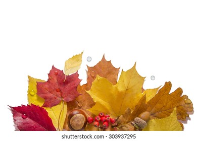 Autumn leaves with nuts, berries and water drops on a white background