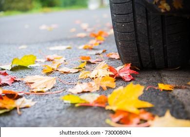 autumn leaves on asphalt with car wheel