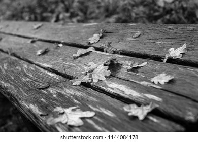 Autumn leaves on bench