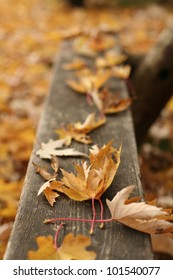 Autumn leaves on the bench in the James Gardens park in Toronto