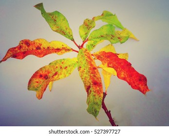 Autumn leaves on Branch of Prune tree isolated in colorful background design.